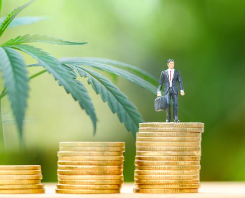 cannabis accounting